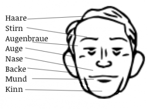 Body Parts in German: Face