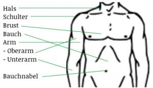 upper body parts