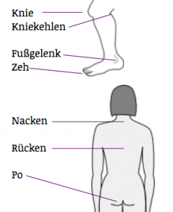 Body Parts in German: legs and back